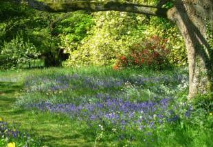 tymawr-convent-grounds-garden06