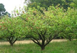 tymawr-convent-grounds-garden01